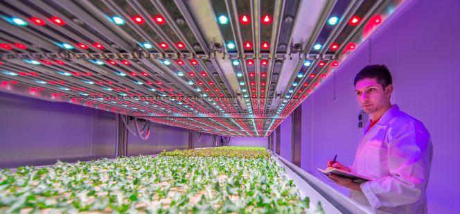 Frutas y verduras cosechadas con iluminación led | Empresas | Cinco Días