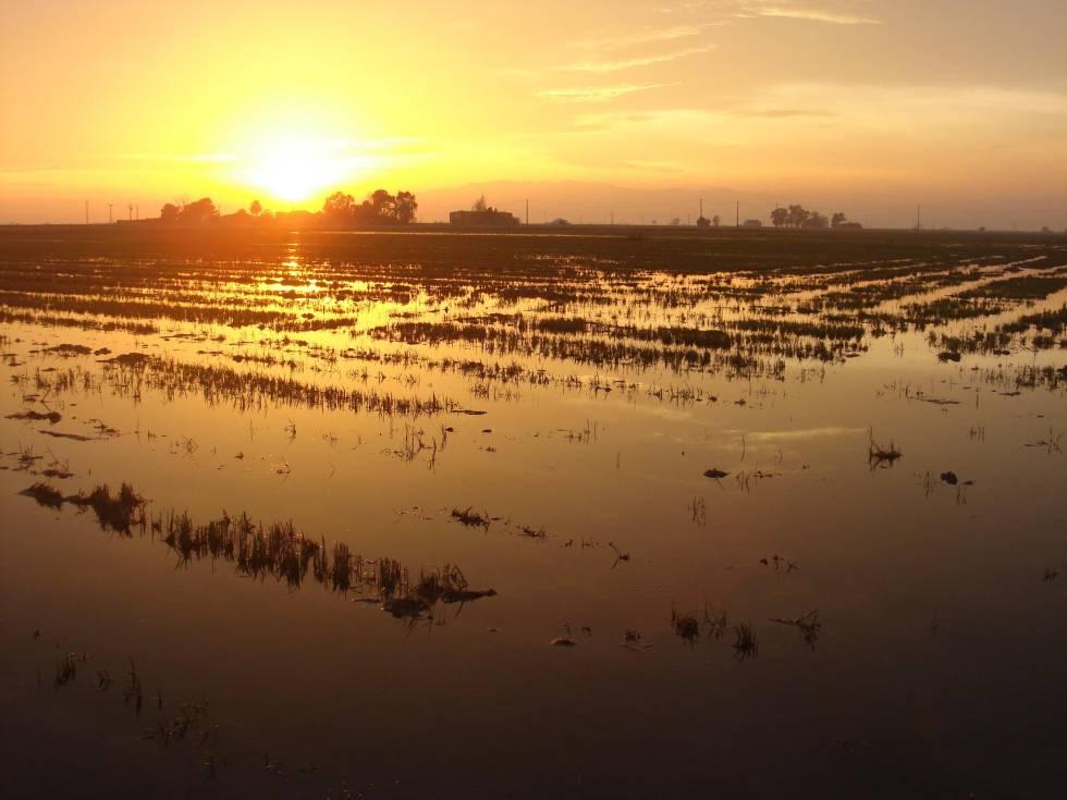Delta del Ebro.