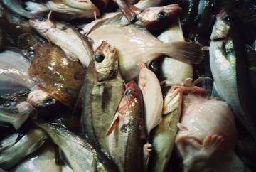 Pescado del Mar del Norte (Comisión Europea)