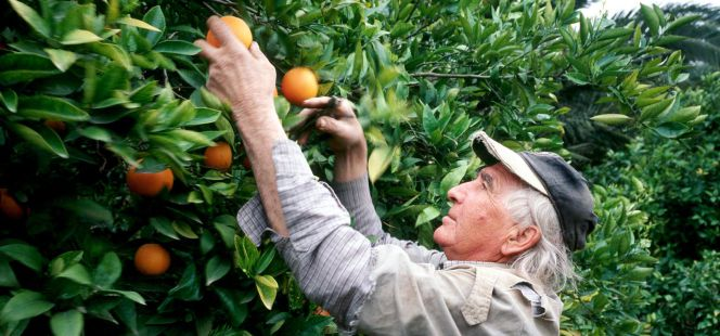 C tricos por internet naranjas del rbol a la mesa - Naranjas del arbol a la mesa ...