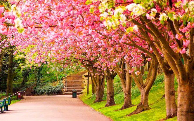 Fondos de escritorio paisajes primaverales