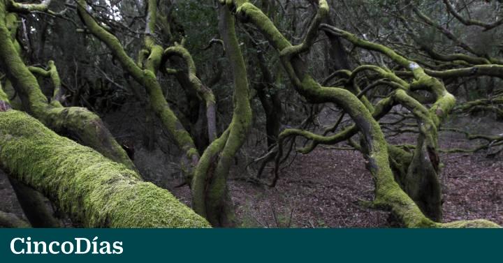 Entre Duendes Y Hadas Por El Bosque Fortuna Cinco Días