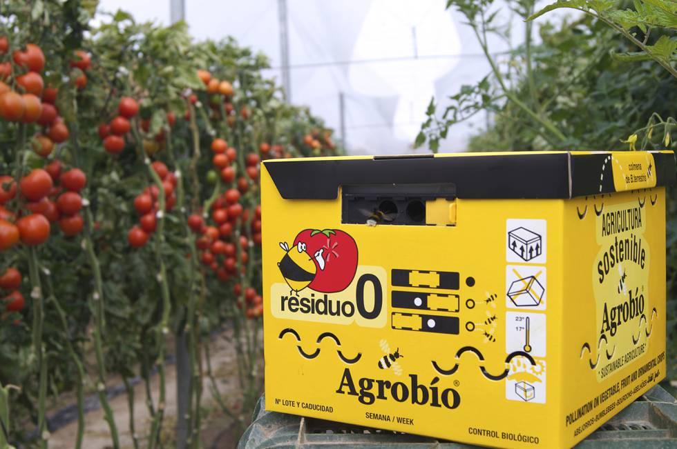 Colmena en una plantación de tomates.