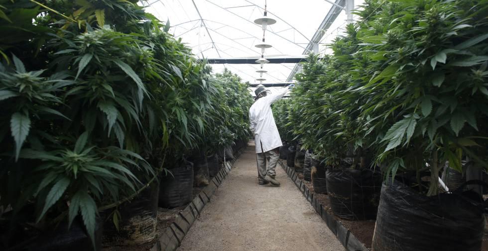 La compañía del hijo de Bob Marley compra una empresa española de cannabis