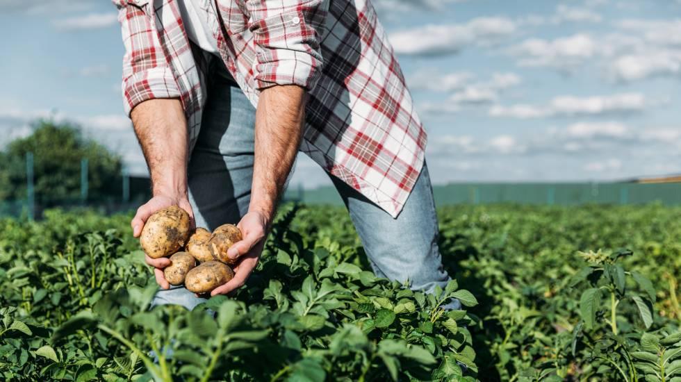Trabajo está dando de alta de oficio en autónomos a agricultores puntuales  | Autónomos | Cinco Días