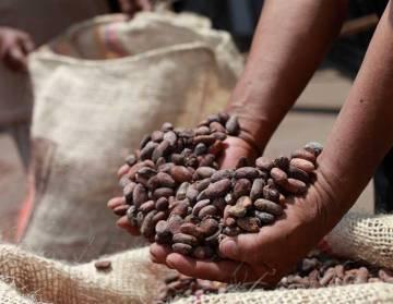 Ecuador coffee